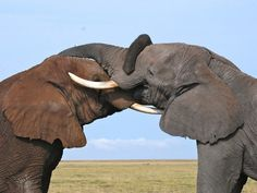Kenya.  Elephants have long, deep friendships, just like humans.