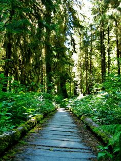 Olympic National Park: Rainforest and Beaches