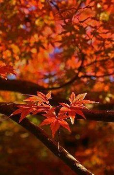 **beautiful** fall