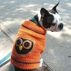 a boston terrier in an owl sweater. thank you....need this for jett and ziggy