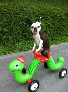 I love it!! I had one of these as a kid and it was my favorite toy and my boston is of course my favorite so this is classic ... Lol