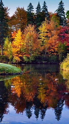 Beautiful Fall colors on Trees on Lake Autumn Scenes, Fall Pictures, Pictures Of Trees, Travel Pictures, Amazing Nature, Beautiful Images Of Nature, Beautiful Scenery Pictures, Amazing Pictures, Pretty Pictures