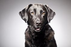 A recent study found black dogs are doing OK! Pit bulls and black cats still need help.