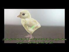 SAVCO for veterinary medicines - YouTube