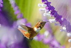 Hummingbird Dream by BH Weber on 500px