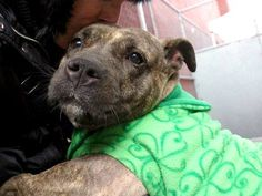 I´M HEARTBROKEN AND SO LONELY IN HERE. PLS DONT LET ME DIE TODAY HALEY NYC DEATHROW 1/16 http://facebook.com/Urgentdeathrowdogs/posts/942651272414419 … … …
