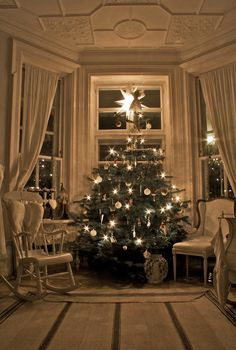 A bay window is a perfect place for a tree. IF I find another house, I'd want to add a bay window.
