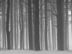 Wisconsin woods
