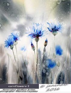 cornflowers I / Watercolour 33x40cm  Arches CP © janinaB. 2016 photographer: ©Karolina Ciejowska