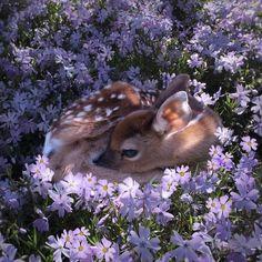 #adorable 🦌💜