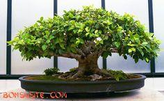 Bonsai plants are beautiful!!!