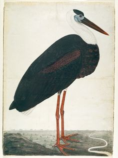Black Stork in a Landscape, Lucknow School, India, 1780