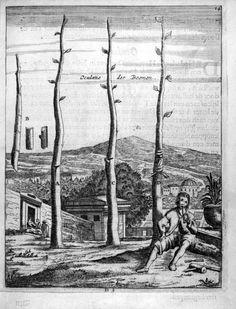 """Den Nederlandtsen Hovenier (1670). """"Oculatie der Boomen."""""""
