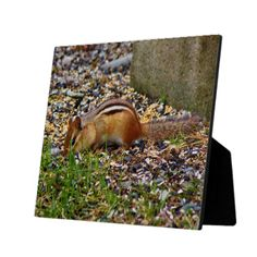 Chipmunk At The Birdfeeder Photo Plaques by KJacksonPhotography #nature, #maine, #chipmunks, #cuteanimals