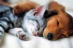 Здоровье и Красота: Ученые рассказали, что владельцы собак счастливее ...