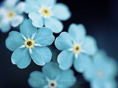 pretty flowers | Blue Flowers . Available in the following size(s): 1024×768