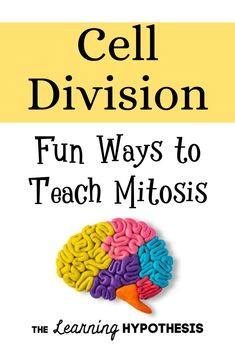 Fun Ways to Teach Mitosis. Middle School and High School Ideas Biology Lessons, Teaching Biology, Science Lessons, Lessons For Kids, Science Experiments, Ap Biology, Life Science, Cell Biology, Science Ideas