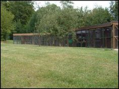 Nutwood Cattery, Clemsfold, Horsham. F.A.B. Design and Management.