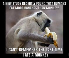 A new study found out that we humans eat more bananas than monkeys. I can't remember the last time I ate monkeys Cheesy Jokes, Corny Jokes, Funny Puns, Sarcastic Humor, Funny Stuff, Funny Fails, Food Jokes, Bad Puns, Jokes