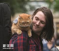 Image result for pictures of a street cat named bob