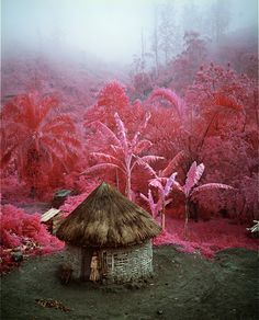 The Infra series: Come Out (1966)- ph.Richard Mosse   North Kivu, Eastern Congo, 2011