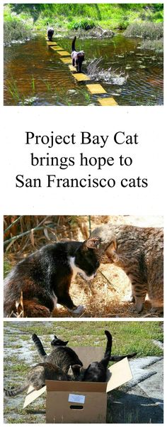 Project Bay Cat brings hope and happiness to the more than 170 homeless cats of the popular hiking/biking trail of Foster City (San Francisco Bay). Story and 12 photos: http://www.traveling-cats.com/2014/02/cats-from-foster-city-usa.html (homeless cats, San Francisco Bay, Foster City, popular hiking trail, popular biking trail, cats, Project Bay Cat, San Francisco Bay cats, Foster City cats)