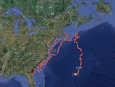 Great White Shark Tracker - Animal Fact Guide