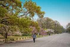 https://flic.kr/p/tGZ5aL   The Kyoto Guen Garden surrounding the imperial palace in Kyoto, Japan
