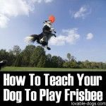 How To Teach Your Dog To Play Frisbee