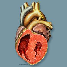 Patent ductus arteriosus (PDA) is a congenital cardiac anomaly where there is persistent patency of the ductus arteriosus, a normal connection of the fetal circulation between the aorta and the pulmonary arterial system that develops from the 6th aortic arch.  http://radiopaedia.org/articles/patent-ductus-arteriosus