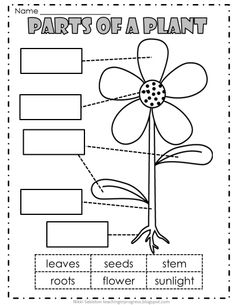 Flower Parts Labeled With Pollination Lessons Of A Plant Worksheet together with Plants Primary Teaching Resources and Printables   SparkleBox furthermore 277 best Plant Unit images on Pinterest   Pre  Activities and likewise Worksheet   Herbs For Kids Word Search By The Herbal Academy Of New further Parts Of A Flower Quiz Pdf   Flowers Healthy furthermore Plant Labeling Worksheet   Free   Worksheet   Pinterest   Worksheets besides Parts of a Plant Worksheets together with Plant Parts  Lesson for Kids   Study additionally  as well Parts of a Flower   PDF Worksheet moreover Color Green Worksheets Free Worksheet Stuff Of Botany Lesson Plans in addition life cycle worksheets for 4th grade – furnishingbg info furthermore Parts of a Plant Worksheets besides Label and color the parts of a plant as well Children can label the parts of a plant  from Super Teacher as well Parts of a plant and flower  Worksheets  diagram  and booklets. on parts of a plant worksheet