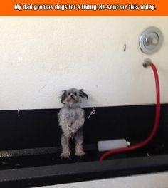 Working At Grooming Spa Seems Pretty Fun.–4 Pics
