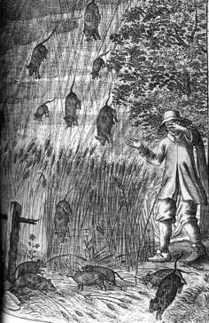 "Raining rats during a particularly violent storm. In: ""Der Wunder-reiche Uberzug [sic] unserer Nider-Welt...."" by Erasmus Francisci, 1680."