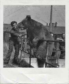 Niedźwiedź Wojtek History Facts, Patriots, Ww2, Poland, Bear, Inspiration, Vintage, Soldiers, Historia