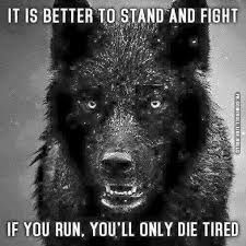 Image result for wolf sayings