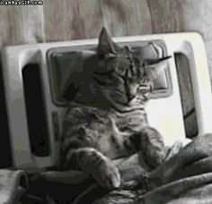 funny-gif-cat-massage-chair