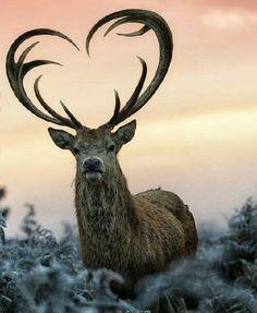 Nature Heart of Wildlife!!