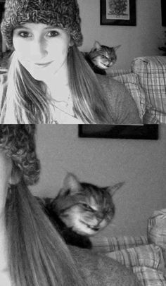 The Devil On Your Shoulder  About 90% of the time, Evil sleeps quietly in a sunbeam, but that doesn't mean you should ever count it out. | The 30 Greatest Animal Photobombs Of 2013
