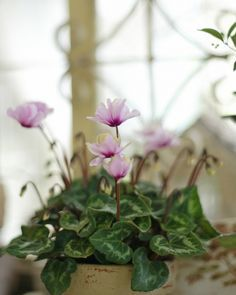 Conservatory Garden, Little Birds, Love Is Sweet, Spring Time, Merry, Plants, Small Birds, Winter Garden, Plant