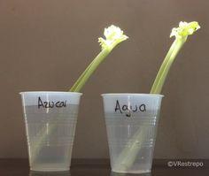 Experimentos para niños | PROYECTOAZUL.COM | Archivos | Experimentos con plantas