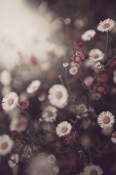 Image via We Heart It #dark #flowers #grunge #wallpapers #backgrounds