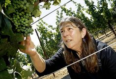 Winemaker Milla Handley likes to walk through the Gewurztraminer vineyards looking at the growth of the grapes which turn pink later in the season. Milla Handley is the winemaker for Hanley Cellars off highway 128 in the Anderson Valley of Mendocino County. Photo: Brant Ward, The Chronicle / SF