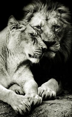 Fuzzy love.
