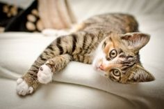 How to Make Your Own Cat Food - http://www.care2.com/greenliving/gourmet-kitty-homemade-cat-food.html?page=2 Some good real food recipes to feed your furry buddy.