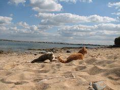Incredible photo.Dalla colonia felina di Su Pallosu, gatto a testa in giù sulla sabbia. | Flickr: Intercambio de fotos