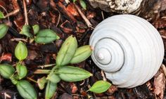 Garden Shell Game – Thursday's Daily Jigsaw Puzzle #Puzzles