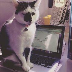 gato blog