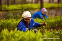 The gender gap in agriculture reduces women's productivity. Closing the gap could lift many people out of poverty & hunger. Poverty And Hunger, Forest Plants, International Day, New Details, Agriculture, Public, Weeding, Acacia, Forests