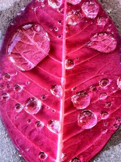 Hot pink leaf with water drops- Absolutely beautiful! Color Magenta, Fuchsia, Purple, Pink Peacock, Pink Lila, Rosa Pink, Vintage Pink, Rose Bonbon, Pink Images