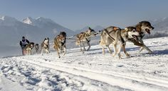 Onno de Jong of the Netherlands with his eight huskies during the 6th international dog sledge race in Inzell, Germany